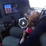 Pilotes d'avions, ils volent au secours de chats et chiens abandonnés