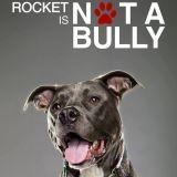 """""""Je ne suis pas une brute"""", ou la douceur des Pit Bulls en images"""
