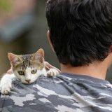 On lui refuse la montée à bord d'un train à cause de son chaton, il le tue
