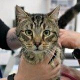 Abandonnés par leur maîtresse, 14 chats livrés à eux-mêmes finissent par se dévorer