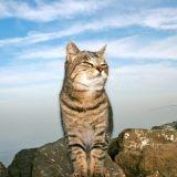 Les chats errants de la baie de San Francisco choyés par des anges gardiens