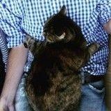 15 chats qui aiment leurs maîtres plus que tout au monde