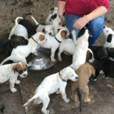 Portée record ! Sa chienne donne naissance à 19 chiots, mais le lendemain le destin bascule