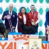 Exposition canine internationale de Troyes : voici les chiens de race qui ont été primés !
