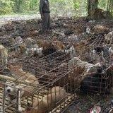 Yulin festival : les mesures prises par le gouvernement chinois, de la poudre aux yeux