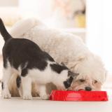 Les glucides contenus dans les croquettes des chiens et chats sont-ils toxiques ?