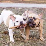 En Chine, un éleveur canin fera de la prison pour avoir donné ces deux noms à ses chiens