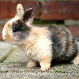 2011, l'année du lapin : n'en adoptez pas !