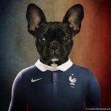 Des chiens portent les couleurs des équipes de foot en lice pour la Coupe du monde