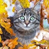 Comment prendre soin de votre chat pendant l'automne ?