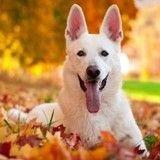 4 précautions à prendre pour le bien-être de votre chien cet automne