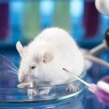 Victoire : votre maquillage ne sera plus testé sur les animaux !