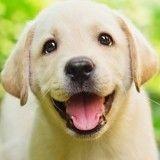 6 choses à faire à l'occasion de la Journée mondiale du chien