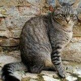 13 ans après sa disparition, une chatte retrouve sa maîtresse alors que celle-ci a déménagé !