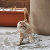 20 «premières fois» où les chats n'ont pas compris ce qu'il leur arrivait