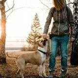 Un chien héroïque sauve sa maîtresse d'une agression au couteau