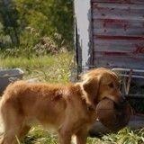 Ce chien est prêt à tout pour retrouver son maître… même à vivre plusieurs vies (Vidéo du jour)