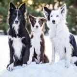 Célèbres sur le Web, ces chiens qui se font des câlins ont accueilli un petit nouveau !