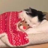 Bien décidé à terminer sa nuit, ce chat retourne se coucher dans son lit (Vidéo du jour)