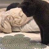 Sous l'influence d'une illusion d'optique, ce chat attaque une feuille de papier ! (Vidéo du jour)