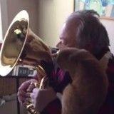 Fan de son maître, ce chat mélomane adore l'entendre jouer du tuba ! (Vidéo du jour)