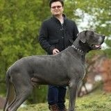 Ce chien est impressionnant : avec ses 98 kg, il pèse aussi lourd qu'un bébé éléphant !