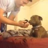 Découvrez l'adorable réaction de ce chien lors de sa première rencontre avec un chaton ! (Vidéo du jour)