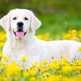 Déconfinement : 7 activités d'extérieur à faire au printemps avec son chien
