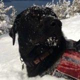 Ce chien de sauvetage a une technique bien à lui pour descendre les pistes de ski ! (Vidéo du jour)