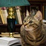 Les chats, aussi intelligents que les chiens ?