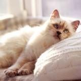 Faire stériliser son chat : pourquoi, et comment ?