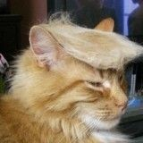Make America Kittens Again : le plugin Google qui transforme les photos Donald Trump et Marine Le Pen en chatons