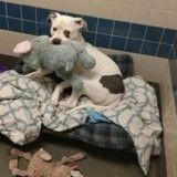 Ce chien fait fondre des bénévoles grâce à sa peluche éléphant et réchappe à l'euthanasie