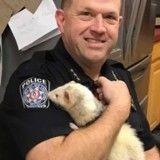 Un policier réalise un drôle de montage photo pour aider un furet perdu à retrouver sa maison