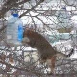 Gourmand, ce chat est prêt à risquer sa vie pour un biscuit ! (Vidéo du jour)