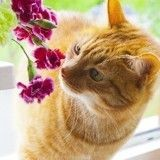 5 remèdes de grand-mère pour dissuader son chat de manger les plantes d'intérieur