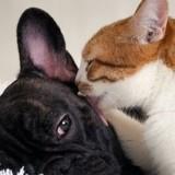 Le deuil chez le chat : comment aider son animal après la mort d'un compagnon ?