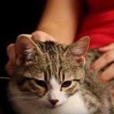 Quand ses maîtres ne sont pas là, ce chaton se transforme en super héros (Vidéo du jour)