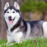 Un gouverneur gracie un chien condamné à mort
