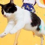 Et le Japon inventa la glace aux parfums «patte de chat» et «patte de chien» !