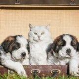10 bonnes raisons de voyager avec son chien ou son chat