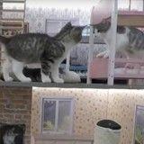 Vous aimez les chatons ? Vous aimez la télé-réalité ? Vous aimerez ce programme !