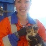 Passager clandestin d'une plateforme pétrolière, ce chaton errant s'est trouvé un maître !