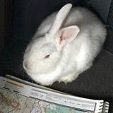 Vous ne devinerez jamais comment ce lapin a été sauvé
