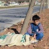 Un jeune réfugié reste aux côtés d'un chien blessé jusqu'à l'arrivée des secours