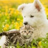15 plantes toxiques pour les chats et les chiens