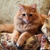 Insecticides, anti-acariens, anti-poux : ces produits d'intérieurs qui sont dangereux pour les chats