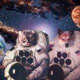 Alerte : la NASA s'apprête à envoyer des animaux dans l'espace pour coloniser Mars !
