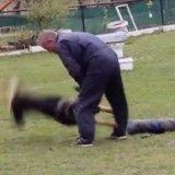 Le procès de l'éducateur canin qui a violenté un chien est reporté au mois de juin