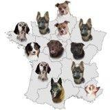 Carte de France de vos chiens de race préférés, région par région